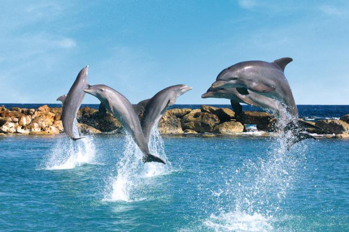 dolfijnen curacao show vakantie