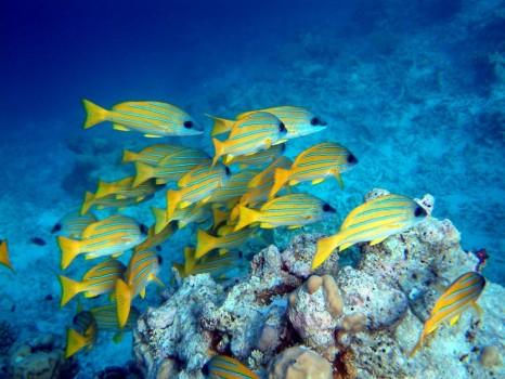 snorkelen vakantie curacao
